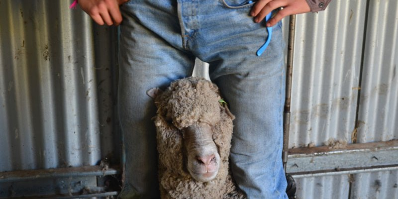 Australie Kickstart Ultimate OZ Ranch schaap