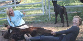 Australie Kickstart Ultimate OZ Ranch stietjes castreren