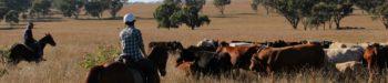 Australie Ultimate Oz Ranch
