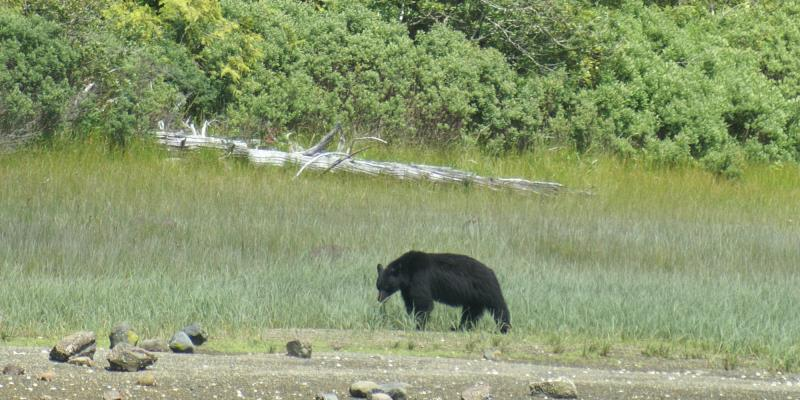 Canada Wilderness Volunteer Program Black Bear Gunner Inlet