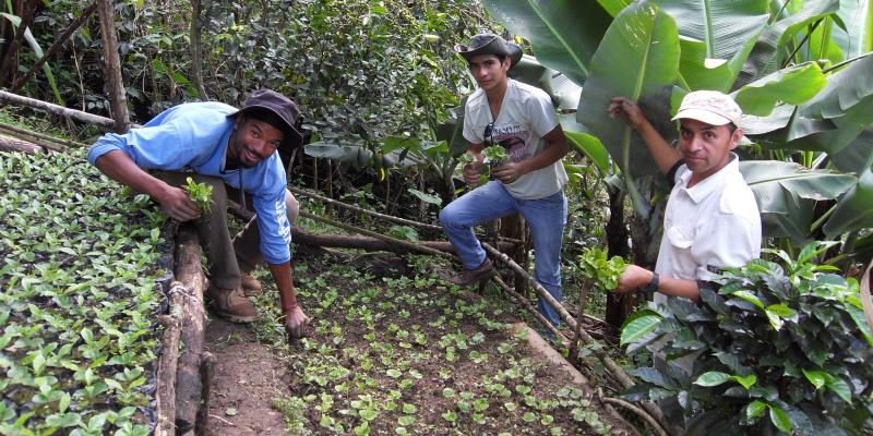 Ecuador vrijwilligerswerk Coffee Planation 2