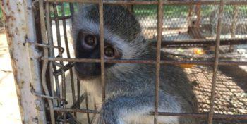 Elien bij Monkey Rehab 5