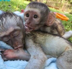 Zuid-Afrika Monkey Rehabilitation Centre