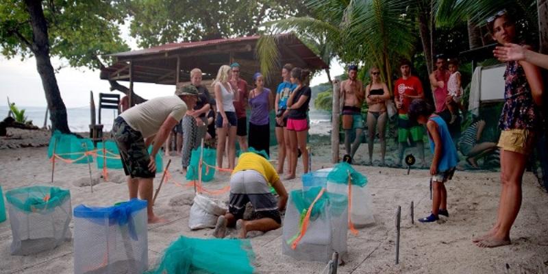Kickstart Costa Rica schildpaddenproject