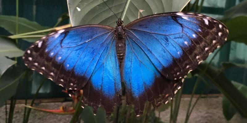 Kickstart Costa Rica vlinder