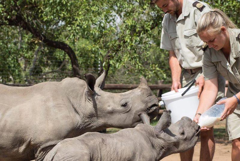 Kickstart Wildlife Zuid-Africa HESC 1