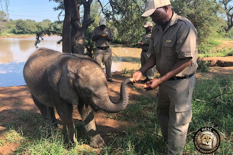 Kickstart Wildlife Zuid-Africa HESC 3