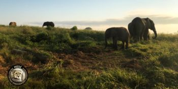 Kickstart Wildlife Zuid-Africa HESC 5