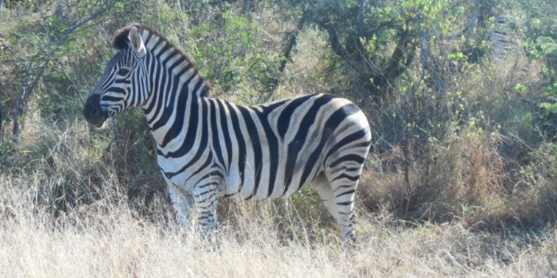 Kruger to Cape Kruger tour
