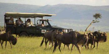 Masai Mara Big Cat Conservation 12