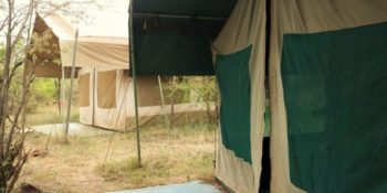 Masai Mara Big Cat Conservation 13