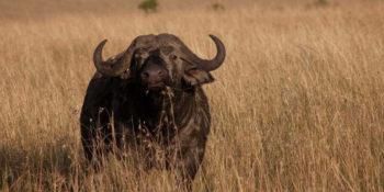 Masai Mara Big Cat Conservation 19
