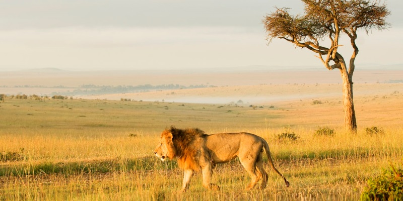 Masai Mara Big Cat Conservation