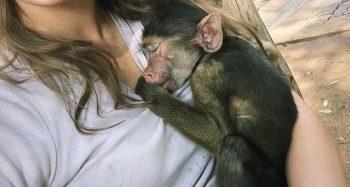 Monkey Rehab foto van Isabelle
