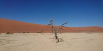 Namibie Wildife Rehab and Research foto gemaakt door Arie