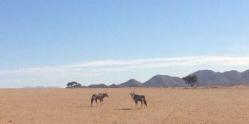 Namibie Wildife Rehab and Research foto gemaakt door Noortje