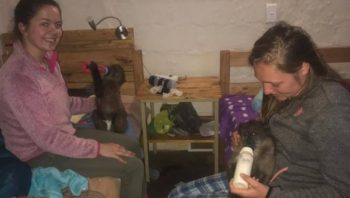Namibie Wildlife Rehab and Research baby feeding
