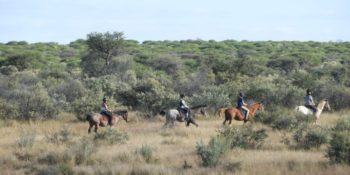 Namibie Wildlife Rehab and Research horses