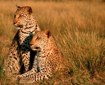 Namibie Wildlife Conservation and Research