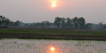 Nepal rijstvelden