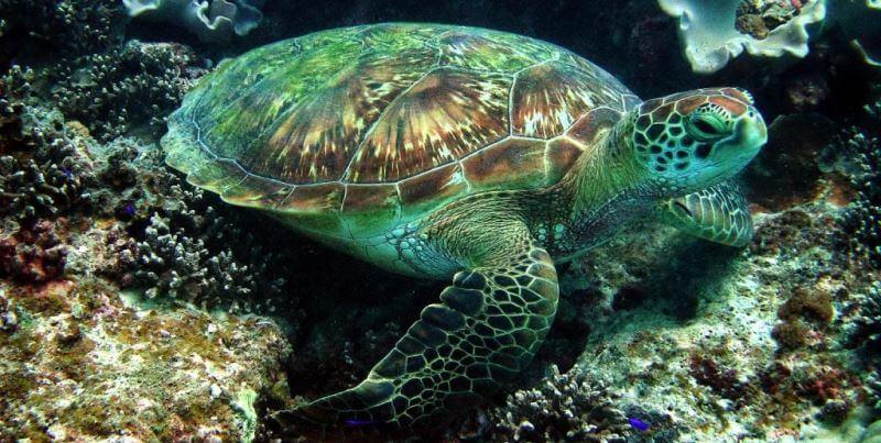 Seychellen Marine and Terrestrial Conservation 10