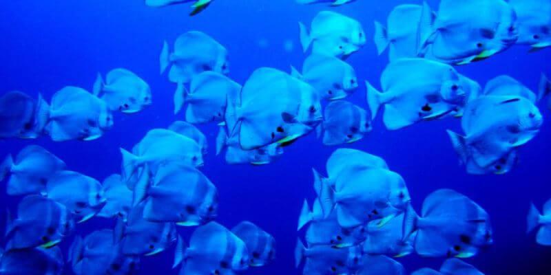 Seychellen Marine and Terrestrial Conservation 11
