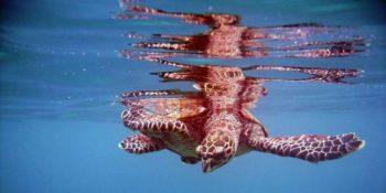 Seychellen Marine and Terrestrial Conservation 12