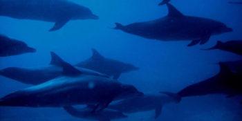 Seychellen Marine and Terrestrial Conservation 9