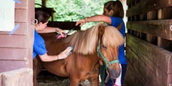 Summercamp USA Paardrijden
