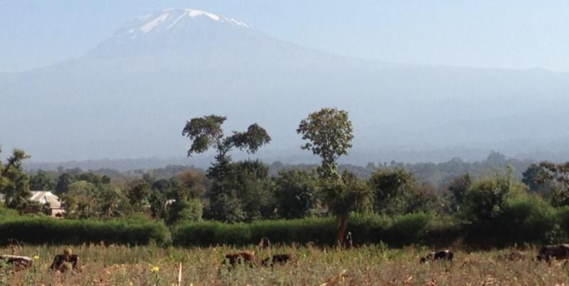 Tanzania vrijwilligerswerk Kilimanjaro