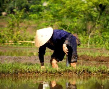 Vrijwilligerswerk in Vietnam