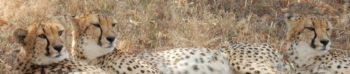 Kickstart Wildlife Zuid-Afrika