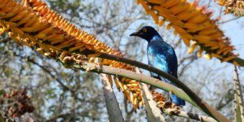 Kickstart Wildlife Zuid=Afrika