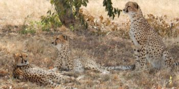 Zuid-Afrika Cheetah and Wildlife Conservation 3