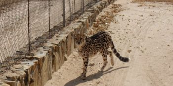 Zuid-Afrika Cheetah and Wildlife Conservation university gedeelte