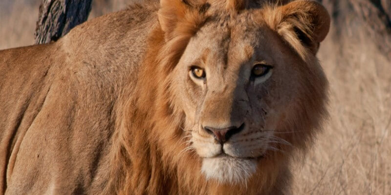 Zuid-Afrika Kruger Research and Conservation le