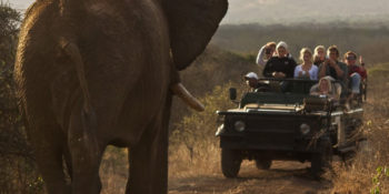 Zuid-Afrika Kruger Research and Conservation olifant