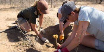 Zuid-Afrika Kruger research and Conservationan Karina met vrijwilligers