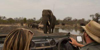 Zuid-Afrika Kruger research and Conservationan Karina tegenover olifant