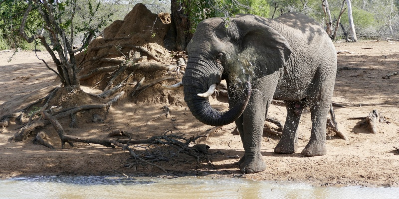 Zuid-Afrika Kwazulu Big 5 reservaten olifant bij waterplaats