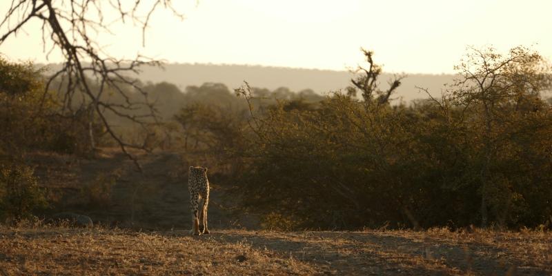 Zuid-Afrika Kwazulu Big 5 reservaten sunset