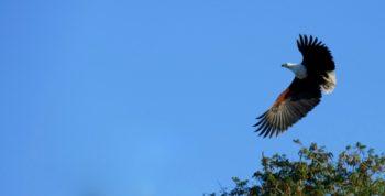 Zuid-Afrika Kwazulu Big 5 reservaten zeearend