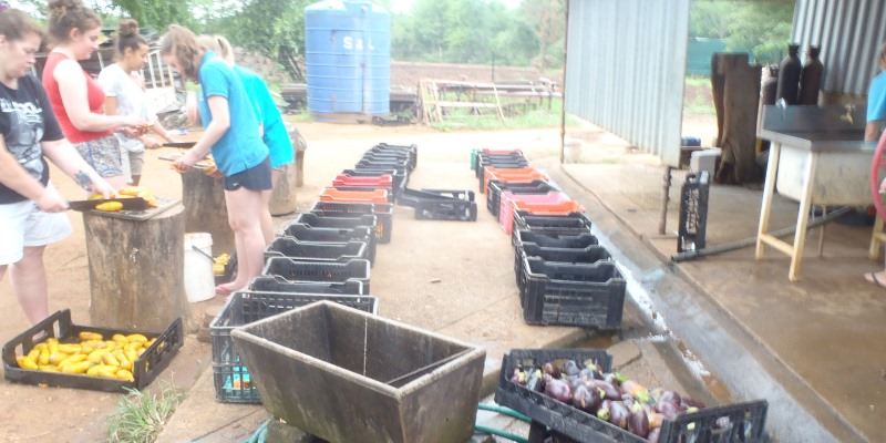 Zuid-Afrika Monkey Rehabilitation project voeding klaarmaken