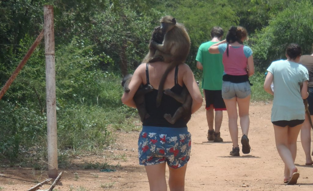 Zuid-Afrika Monkey Rehabilitation project bavianen uitlaten
