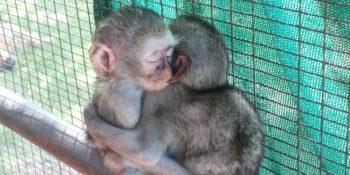 Zuid-Afrika Monkey Rehab Badtijd