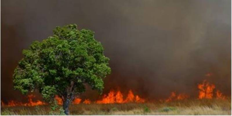 Zuid-Afrika Welgevonden Conservation and Research Fire Fighting