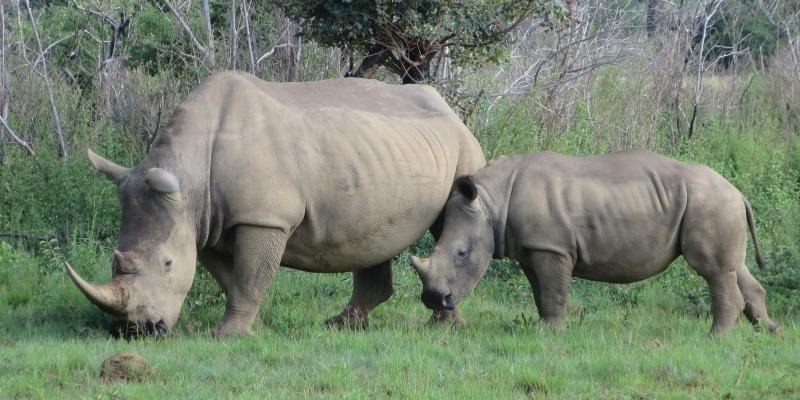 Zuid-Afrika Welgevonden Conservation and Research Sien