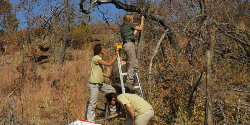 Zuid-Afrika Welgevonden Conservation and Research nest box checking