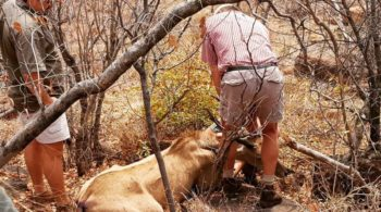 Zuid-Afrika Welgevonden Conservation and Research vet jpg