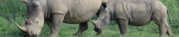 Zuid-Afrika Kruger Research and Conservation project